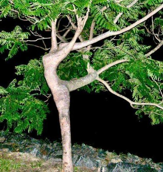 【※神秘※】「木」が自然にスケベ化してる画像貼ってく。 → 大自然スゴ杉ワロタwwwwwwwwwwww(画像あり)・10枚目