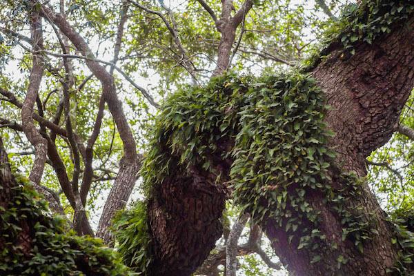 【※神秘※】「木」が自然にスケベ化してる画像貼ってく。 → 大自然スゴ杉ワロタwwwwwwwwwwww(画像あり)・11枚目