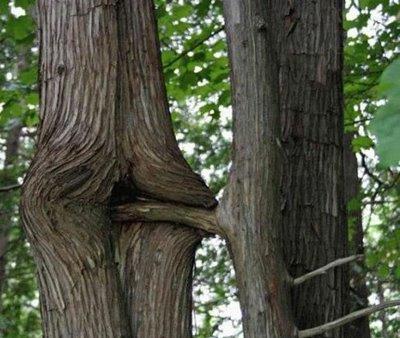 【※神秘※】「木」が自然にスケベ化してる画像貼ってく。 → 大自然スゴ杉ワロタwwwwwwwwwwww(画像あり)・13枚目