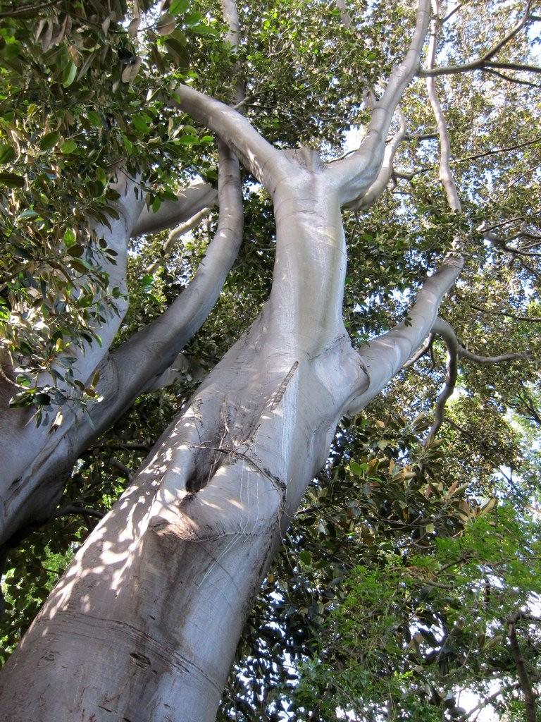 【※神秘※】「木」が自然にスケベ化してる画像貼ってく。 → 大自然スゴ杉ワロタwwwwwwwwwwww(画像あり)・14枚目