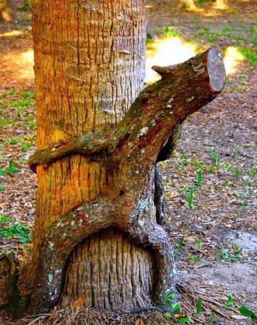 【※神秘※】「木」が自然にスケベ化してる画像貼ってく。 → 大自然スゴ杉ワロタwwwwwwwwwwww(画像あり)・15枚目