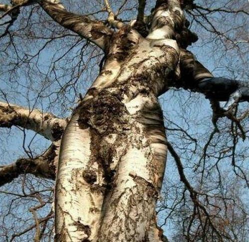【※神秘※】「木」が自然にスケベ化してる画像貼ってく。 → 大自然スゴ杉ワロタwwwwwwwwwwww(画像あり)・16枚目
