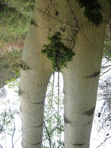 【※神秘※】「木」が自然にスケベ化してる画像貼ってく。 → 大自然スゴ杉ワロタwwwwwwwwwwww(画像あり)・17枚目
