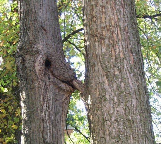 【※神秘※】「木」が自然にスケベ化してる画像貼ってく。 → 大自然スゴ杉ワロタwwwwwwwwwwww(画像あり)・2枚目