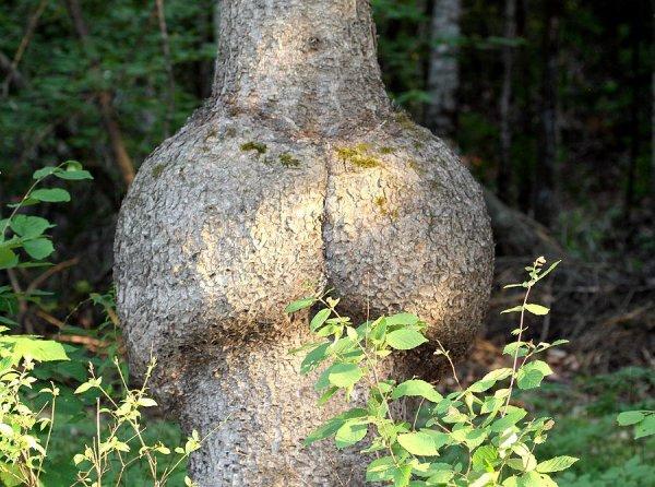 【※神秘※】「木」が自然にスケベ化してる画像貼ってく。 → 大自然スゴ杉ワロタwwwwwwwwwwww(画像あり)・20枚目