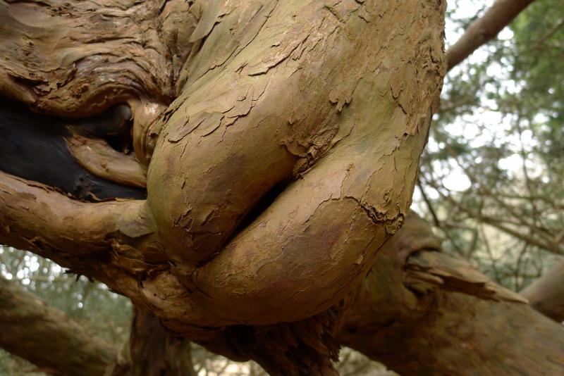 【※神秘※】「木」が自然にスケベ化してる画像貼ってく。 → 大自然スゴ杉ワロタwwwwwwwwwwww(画像あり)・23枚目