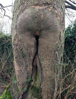【※神秘※】「木」が自然にスケベ化してる画像貼ってく。 → 大自然スゴ杉ワロタwwwwwwwwwwww(画像あり)・24枚目