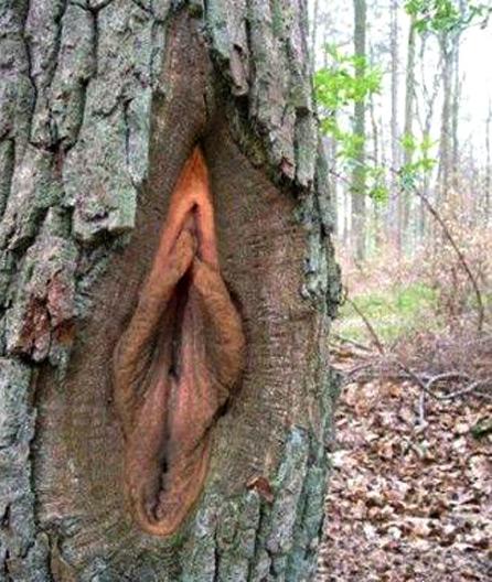 【※神秘※】「木」が自然にスケベ化してる画像貼ってく。 → 大自然スゴ杉ワロタwwwwwwwwwwww(画像あり)・26枚目