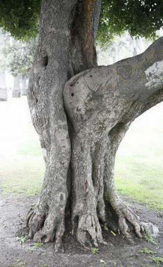 【※神秘※】「木」が自然にスケベ化してる画像貼ってく。 → 大自然スゴ杉ワロタwwwwwwwwwwww(画像あり)・3枚目