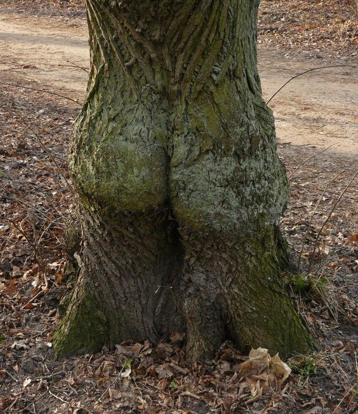 【※神秘※】「木」が自然にスケベ化してる画像貼ってく。 → 大自然スゴ杉ワロタwwwwwwwwwwww(画像あり)・6枚目