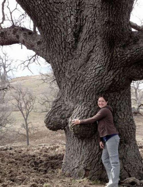 【※神秘※】「木」が自然にスケベ化してる画像貼ってく。 → 大自然スゴ杉ワロタwwwwwwwwwwww(画像あり)・7枚目