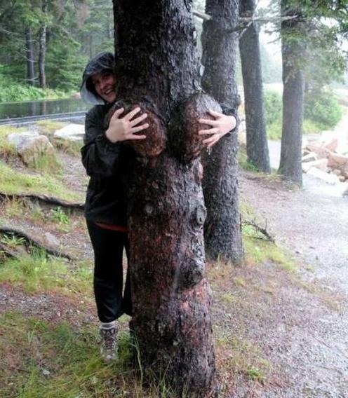 【※神秘※】「木」が自然にスケベ化してる画像貼ってく。 → 大自然スゴ杉ワロタwwwwwwwwwwww(画像あり)・8枚目